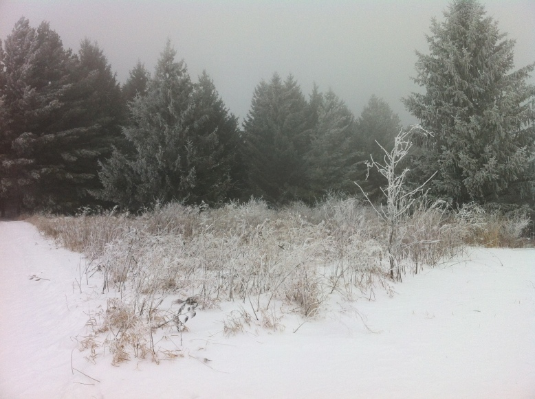 Hoar frost at Blue Mounds State Park last winter