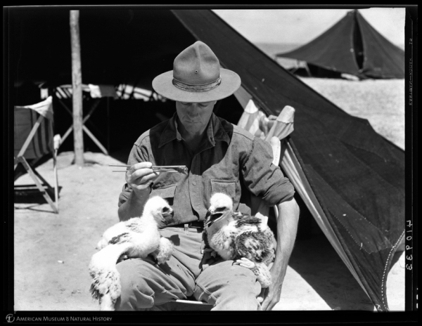 In the above image, Roy Chapman Andrews feeds baby eagles at his camp in Mongolia in 1928.